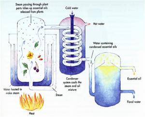 distillazione in corrente di vapore e aromaterapia di base