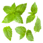 collection-mint-leaves-isolated-white-background-53735336