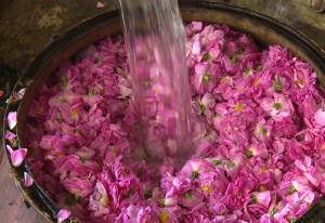 acqua floreale di rosa damascena BIO Iran